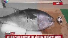 140 kg balık oltasına böyle takıldı?