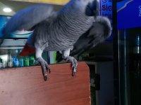 Papağana 3209 Lira Ceza
