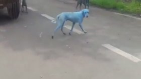 Mavi Köpekler Dünyayı Ayağa Kaldırdı
