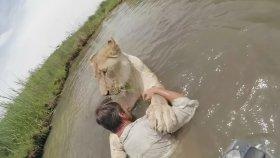 Aslanın Kurtarıcısını Yıllar Sonra Karşılaması