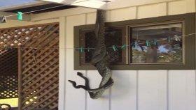 Mutfak Penceresinde Yılanların Çiftleşme Dansı