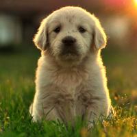 Bobi - Yavru Köpek Videoları Kanalı