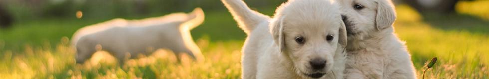 Bobi - Yavru Köpek Videoları